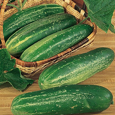 Seeds - H Cucumber 'Straight Eight'