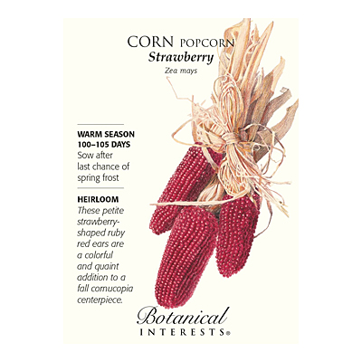 Seeds - BI Orn Corn Strawberry Popcorn