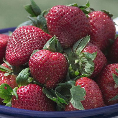 Fragaria 'Sparkle'