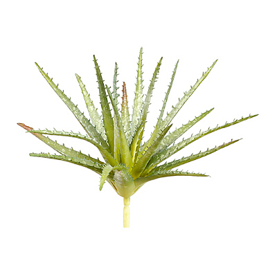 Succulent - Aloe Soft Pick, Green