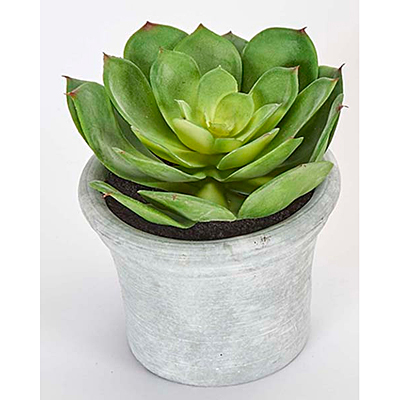 Faux Succulent in Container