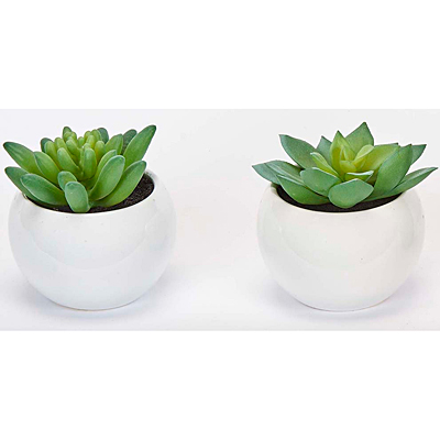 Faux Succulent in White Ceramic Container
