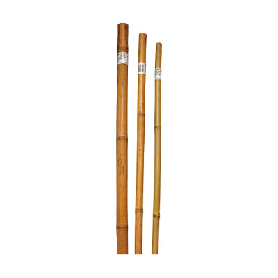 Stakes - Bamboo Super Pole Terra Verde