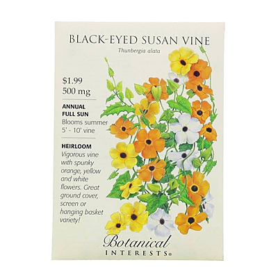 Seeds - BI Black-Eyed Susan Vine