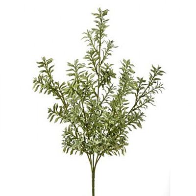 Tea Leaf Varigated Bush - Green/White