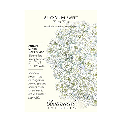 Seeds - BI Alyssum Sweet Tiny Tim