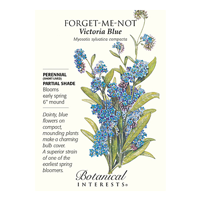Seeds - BI Forget-Me-Not Victoria Blue