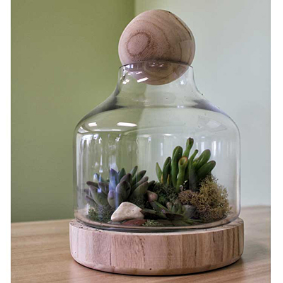 Vidro Terrarium with Wood Dish & Stopper