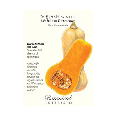 Seeds - BI Squash Winter Waltham Butternut