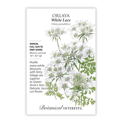 Seeds - BI Orlaya White Lace